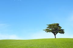 Green field with blue sky Stock Images