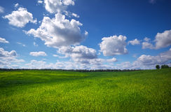 Green field and blue sky. Stock Photo