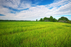 Green field and blue sky. Royalty Free Stock Images