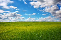 Green field and blue sky. Stock Image