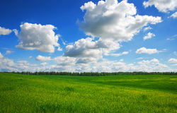 Green field and blue sky. Royalty Free Stock Photos