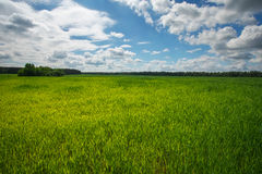 Green field and blue sky. Beatiful green field with blue sky. Royalty Free Stock Photos