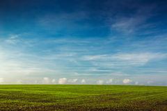 Green field and blue sky with beautiful fluffy clouds Royalty Free Stock Image