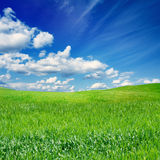 Green field, blue sky Stock Photos