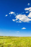 Green field and the blue sky. Royalty Free Stock Photos