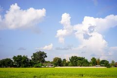 Green field and blue sky. With big clouds Stock Images