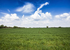 Green field and blue sky. Stock Images