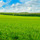 Green field and blue sky with clouds Royalty Free Stock Photos