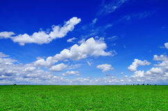 Green field with a blue sky with clouds. Green grass field with a blue sky with clouds Royalty Free Stock Photo