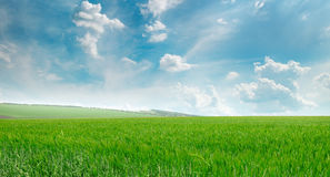 Green field and blue sky with  clouds Stock Photography