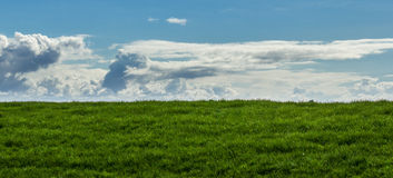 Green field with blue sky and clouds. Texture or background Royalty Free Stock Images