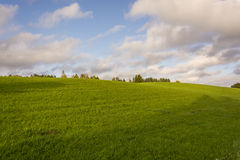 Green field with blue sky and clouds for wallpaper. Green field with white clouds and blue sky for wallpaper Stock Photos