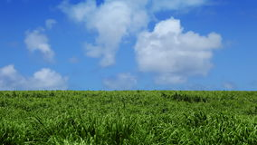 Green Field and Blue Sky with Clouds Stock Image
