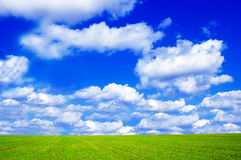 Green field and blue sky conceptual image. Picture of green field and sky in summer Stock Photo