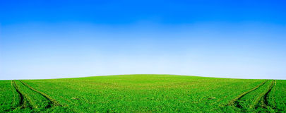 Green field and blue sky conceptual image. Panorama of green field and sky in summer Stock Photography