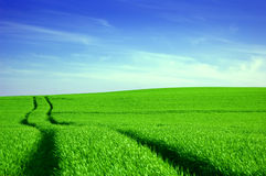 Green field and blue sky conceptual image. Picture of green field and sky in summer Royalty Free Stock Photo