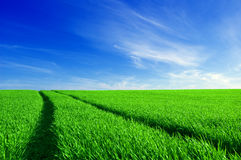 Green field and blue sky conceptual image. Picture of green field and sky in summer Royalty Free Stock Photos