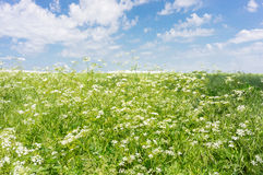 Green field blue sky Royalty Free Stock Photography