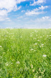 Green field blue sky Royalty Free Stock Image