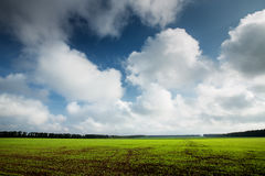 Green field and blue sky with fluffy clouds Royalty Free Stock Photography