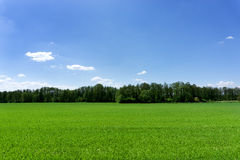 Green field and a blue sky royalty free stock images