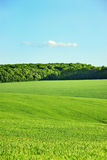 Green field and blue sky. Green field and forest on blue sky Stock Photos