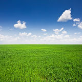 Green field and blue sky. Landscape Royalty Free Stock Images