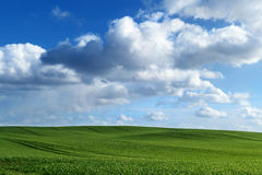 Green field and blue sky with large clouds Royalty Free Stock Photo