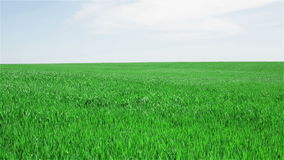Green field stock footage