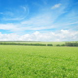 Green field and blue sky. With light clouds Royalty Free Stock Image