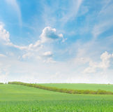 Green field and blue sky Royalty Free Stock Photos