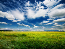 Green field and blue sky Stock Images