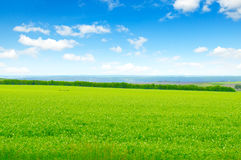 Green field and blue sky. With light clouds Royalty Free Stock Photos