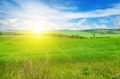 Green field and blue sky with light clouds. Above the horizon is. A bright sunrise. Agricultural landscape Royalty Free Stock Image