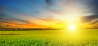 Green field and blue sky with light clouds. Above the horizon is royalty free stock photography