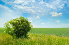 Green field and blue sky with light clouds Royalty Free Stock Photography