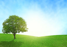 Green field, blue sky and lighting flare on grass. Royalty Free Stock Images