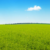 Green field and blue sky. Picturesque green field and blue sky Stock Image