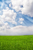 Green field and blue sky with rays Royalty Free Stock Photo