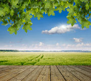 Green field and blue sky. Spring field and blue sky Royalty Free Stock Photography