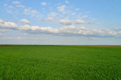 Green field blue sky Royalty Free Stock Images