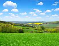 Green field with blue sky. Royalty Free Stock Photo