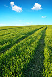 Green field with blue sky. Stock Photo