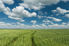 Green field and blue sky spring landscape Stock Image