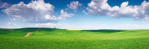 Green field and blue sky. Summer Green field and blue sky Royalty Free Stock Photography