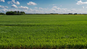 Green grass field and blue sky Royalty Free Stock Photo