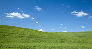 Green Field on a Blue Sky Summer Day Stock Image