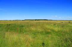 Green field and blue sky summer landscape Stock Photos