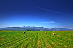 Green Field With Blue Sky Royalty Free Stock Photos