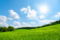 Green field and blue sky. With sun Royalty Free Stock Photo